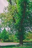 Árvores no parque Leeds Castle Kent da flor do Reino Unido foto de stock