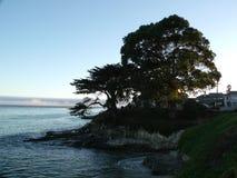 Árvores no penhasco do perto do oceano Fotos de Stock Royalty Free