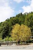 Árvores no platô Imagens de Stock
