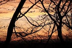 Árvores no por do sol imagens de stock royalty free