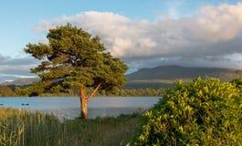 Árvores no por do sol em ruínas do castelo de McCarthy Mor Irish no Lough Leane no anel do Kerry na Irlanda de Killarney foto de stock royalty free