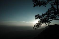 Árvores no por do sol: Silhueta Imagem de Stock Royalty Free