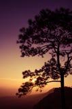 Árvores no por do sol: Silhueta Imagens de Stock Royalty Free