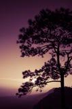 Árvores no por do sol: Silhueta Foto de Stock Royalty Free