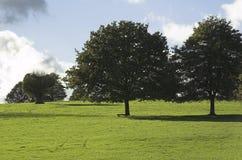Árvores no prado imagens de stock