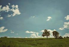 Árvores no prado Imagens de Stock Royalty Free