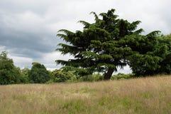 Árvores no prado com céu e nuvens imagem de stock
