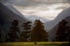 Árvores no prado na frente das montanhas Foto de Stock Royalty Free