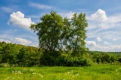 Árvores no prado no campo Fotografia de Stock Royalty Free