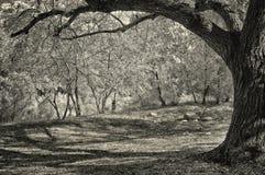 Árvores no Riverbank, Califórnia Foto de Stock Royalty Free