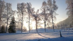 Árvores no sol Imagem de Stock Royalty Free