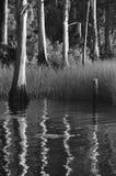 Árvores no St Johns River imagem de stock