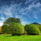 Árvores no vale Fotos de Stock