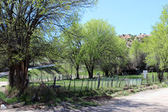 Árvores no vale Foto de Stock