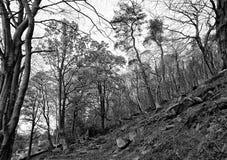 Árvores no vale de Colden Foto de Stock Royalty Free