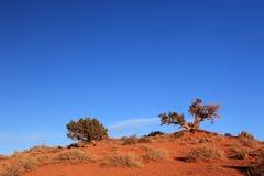Árvores no vale do monumento Foto de Stock