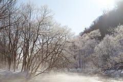 Árvores no Wintertime Fotografia de Stock Royalty Free