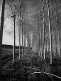 Árvores nos corredores Foto de Stock