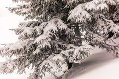 Árvores nos cumes suíços sob uma queda de neve pesada - 11 Imagem de Stock Royalty Free
