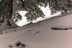 Árvores nos cumes suíços sob uma queda de neve pesada - 16 Imagens de Stock Royalty Free