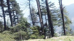 Árvores nos montes imagens de stock royalty free