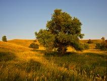 Árvores nos montes Foto de Stock Royalty Free