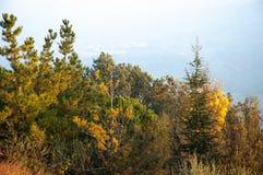 Árvores nos montes de Montefeltro, na região de Marche de Itália imagem de stock royalty free