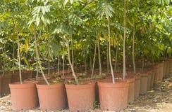 Árvores novas imagem de stock