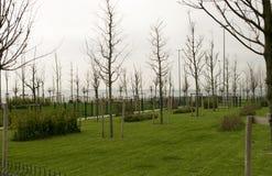 Árvores novas e grama verde fresca no parque novo no dia nebuloso imagens de stock