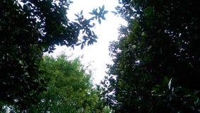 Árvores nublado fotografia de stock royalty free