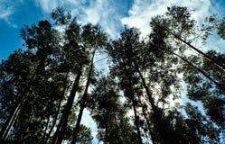Árvores olhadas de baixo de foto de stock royalty free