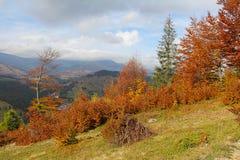 Árvores outonais na montanha fotografia de stock