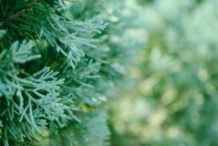 Árvores para o Natal 1 Fotografia de Stock Royalty Free