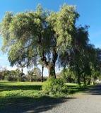 Árvores pelo caminho fotografia de stock