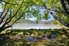 Árvores pelo lago imagem de stock