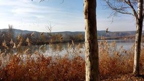 Árvores pelo lago Foto de Stock Royalty Free