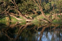 Árvores pelo rio Foto de Stock Royalty Free