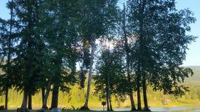 Árvores pelo rio Fotos de Stock