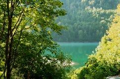 Árvores pelo rio foto de stock