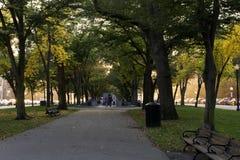 Árvores pequenas bonitas do parque com folhas amarelas Fotografia de Stock Royalty Free