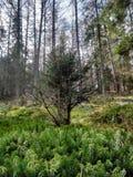 Árvores pequenas do beutifull imagens de stock