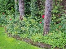 Árvores pequenas que crescem no jardim frondoso foto de stock royalty free