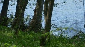 Árvores perto da costa do lago video estoque