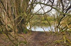 Árvores perto de um lago pequeno Imagem de Stock