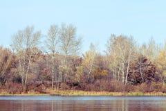 Árvores perto do rio de Dnieper no outono imagem de stock