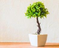 Árvores plásticas Fotos de Stock