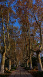 Árvores planas do inverno Imagens de Stock