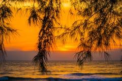 Árvores plantadas no mar com a aumentação do sol Imagens de Stock Royalty Free