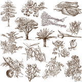 Árvores, plantas e flores Fotos de Stock Royalty Free