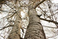 Árvores poderosas em um parque Fotos de Stock Royalty Free
